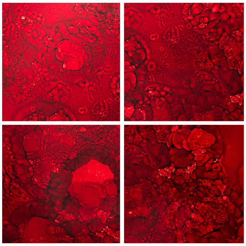 Devotion Ruby Glass Tile